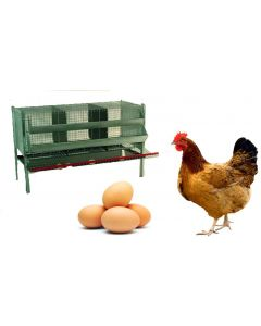 gabbia per allevamento galline ovaiole 3 posti 106 x 70 x h 80 cm